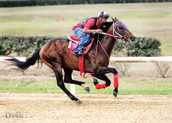 CookieS-Horsepower