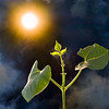 """Greensquared - Photosynthesis  <a href=""""http://greensquared.smugmug.com/gallery/8208718_Kr5y5#536463965_5GXwf_"""" target=""""_blank"""">Exifs</a>"""