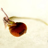 """JAG - Lil Sprout <a href=""""http://jagcreations.smugmug.com/photos/newexif.mg?ImageID=907886477&ImageKey=S4gT6""""target=""""_blank"""">EXIF 1</a> <a href=""""http://jagcreations.smugmug.com/photos/newexif.mg?ImageID=907888365&ImageKey=Fhgzk""""target=""""_blank"""">EXIF 2</a> The sprout exif is found under """"i"""""""