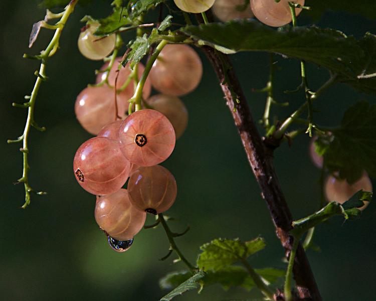 kdotaylor - Becoming Fruit
