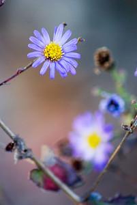kungaloosh - Tiny Flower