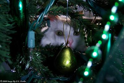 Samsplace - Secret Santa