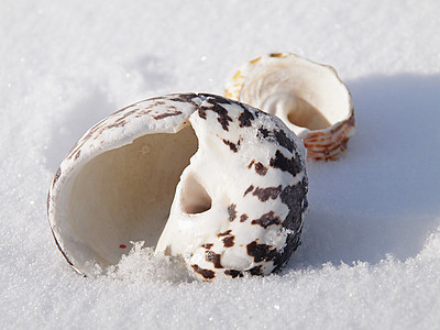 "AnnasPhotos- ""Snow Shells"""