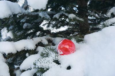 Roaddog 52 - Christmas Colors