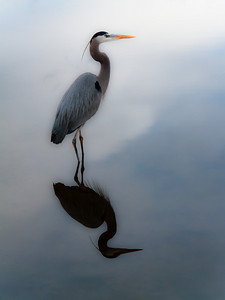 """AaronNelson - """"Regal Waters""""  http://dgrin.com/showthread.php?t=116072  www.pictureworks.smugmug.com"""