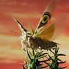 cromwell - Flying Away