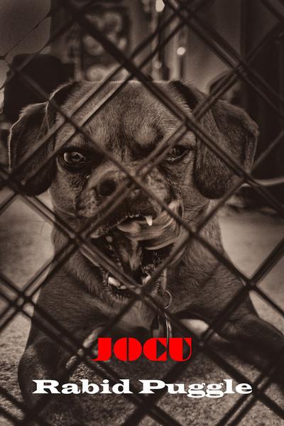 SAMBALAM - JOCU: Rabid Puggle