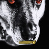 "Chandlerja - Doggy Horror<br /> Exifs = <a href=""http://smu.gs/IqbZBi"">http://smu.gs/IqbZBi</a>"