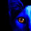 "lkbart - Katavar <a href=""http://bartlettphotoart.smugmug.com/photos/newexif.mg?ImageID=1822238478&ImageKey=BLsmHB9"" target=""_blank"">EXIF</a> <a href=""http://bartlettphotoart.smugmug.com/photos/newexif.mg?ImageID=1822240357&ImageKey=nJXxrTz"" target=""_blank"">EXIF</a>"