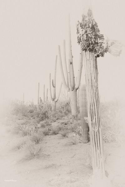 dlplumer - Desert Lineup