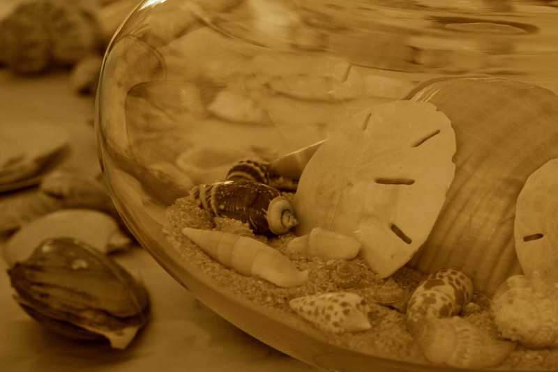 marantophotography- Beach in a Jar