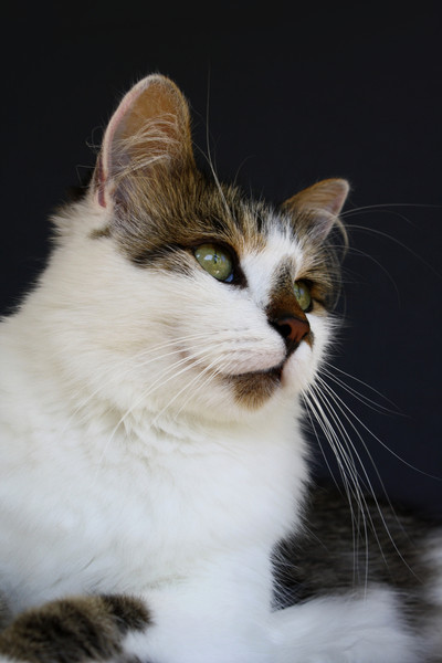 sweetharmony - Fluffy Feline