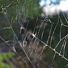 Endurodog - Silk Web