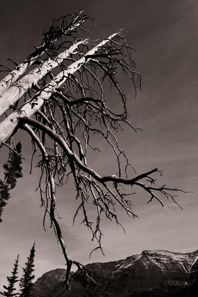"""zweiblumen - """"Dead Tree"""""""