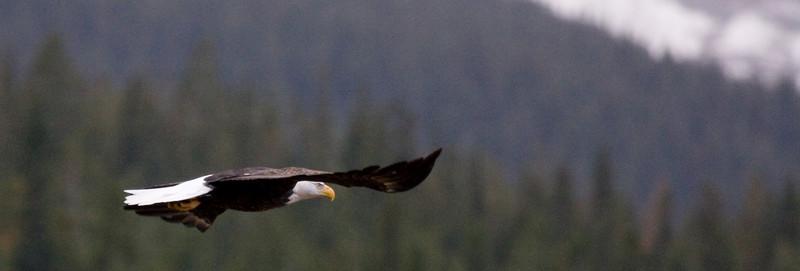 bendr - Eagle in Flight