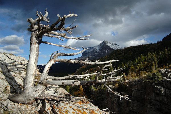 Greaper - The Dead Tree, Glacier National Park