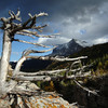 Greaper - The Dead Tree, Glacier National Park