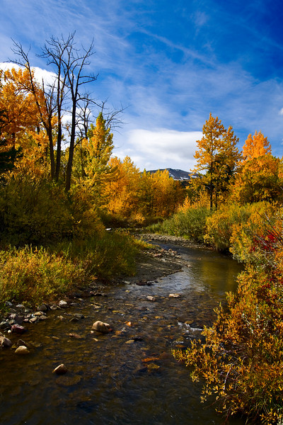 bendr - A Fall Stream