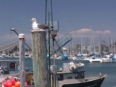 ['napping  Fisherman' -Siesta-] photo by Anson: Channel Islands Harbor Oxnard, California 2:02(oops!) PM - PST (view, due East from the Pacific Ocean)
