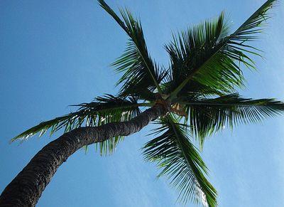 "photo by kudbegud.  Kalama Park, Kihei, Hawaii 96753.  N20º 43.822"" W156º 27.146"" Shot straight up, Ahhhhhhh.....paradise!"