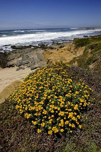 Photo by Ian Clements.  Pigeon Point Lighthouse, Northern California.  37.18N 122.39W.