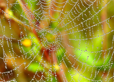 Dew on the Web By E.B. West