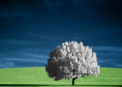 Lone Tree in IR By TristanP