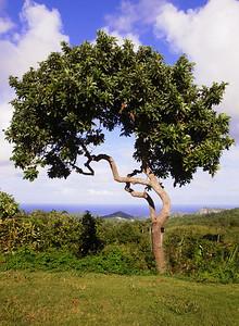 Dgrinner: Oobers  Overlooking the east coast of Barbados.