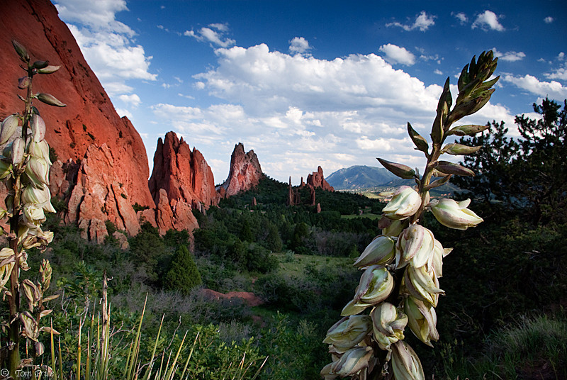 Yucca and Sandstone