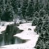 20050425_Wyoming_004_800px