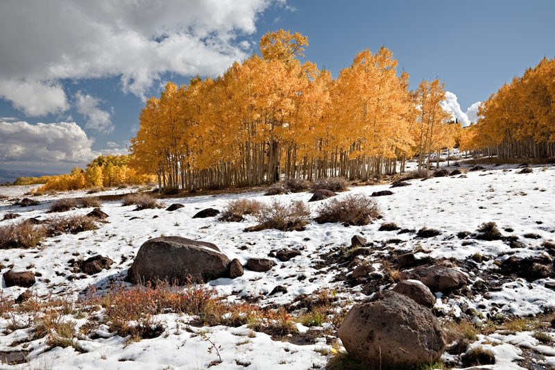Pathfinder<br /> <br /> Aspens in the Snow on Boulder Mountain