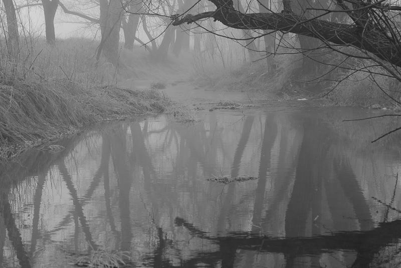 dgrin name: DarCal<br /> <br /> <br /> Title: Creek Fog
