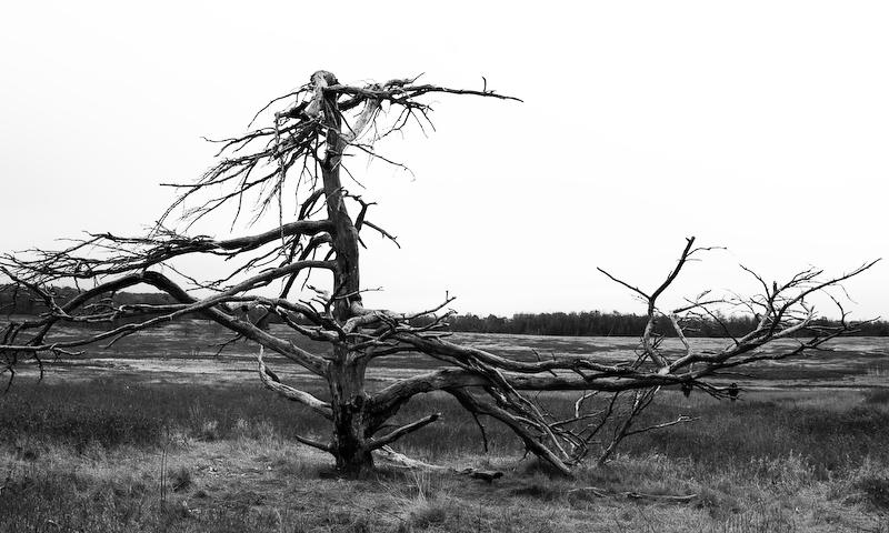 RogersDA<br /> Remnants at Big Meadows
