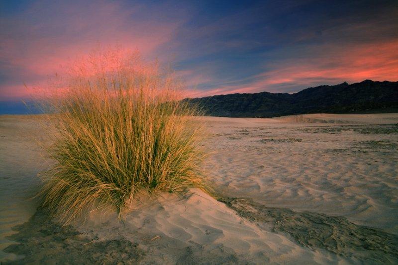 Toddlio<br /> Dunes at Sunrise