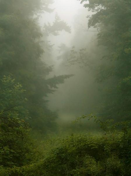 Tessa HD<br /> Misty Morning