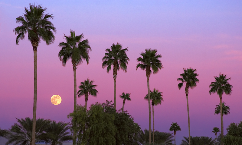 Daveman<br /> Sunset Moon