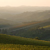 BenA2<br /> Hills of Chianti