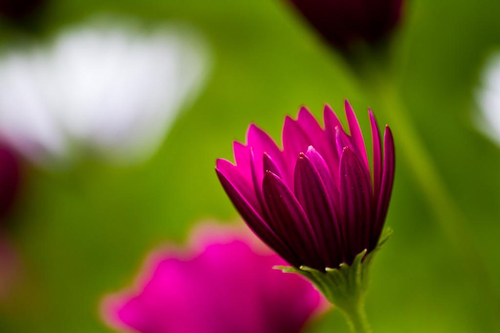 Photographer: CWSkopec Title: Presidio Flowers