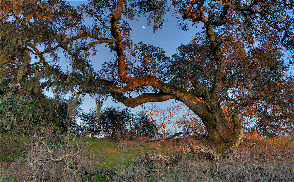 3 image HDR taken at Crane Creek Regional Park, Sonoma County