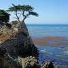 hawkeye978<br /> Lone Cypress