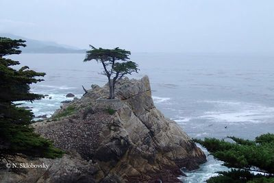 The Lone Cypress, CA