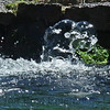 Braemar Springs Bubble<br /> Freeze or Flow - 4.