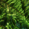 Underwater Fern - Orton Inspired (6)