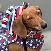 Puppy at Comic Con with the American Stars and Stripes