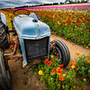 Tractor in the Flower Fields