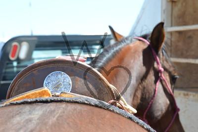 Assorted Horses
