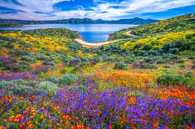 California Spring Wildflower Superbloom Symphony #22: Diamond Valley Lake Wildflower Trail Superbloom!   California Poppy Wild Flower Super Bloom Fine Art Landscape Nature Photography!  Elliot McGucken Fine Art Prints & Luxury Wall Art
