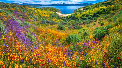 California Spring Wildflower Superbloom Symphony #17: Diamond Valley Lake Wildflower Trail Superbloom!   California Poppy Wild Flower Super Bloom Fine Art Landscape Nature Photography!  Elliot McGucken Fine Art Prints & Luxury Wall Art
