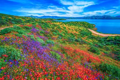 California Spring Wildflower Superbloom Symphony #24: Diamond Valley Lake Wildflower Trail Superbloom!   California Poppy Wild Flower Super Bloom Fine Art Landscape Nature Photography!  Elliot McGucken Fine Art Prints & Luxury Wall Art