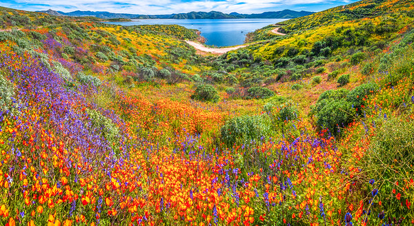 California Spring Wildflower Superbloom Symphony #8: Diamond Valley Lake Wildflower Trail Superbloom!   California Poppy Wild Flower Super Bloom Fine Art Landscape Nature Photography!  Elliot McGucken Fine Art Prints & Luxury Wall Art